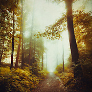 Hike through a misty forest at sunrise