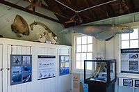 Marine Science exhibit, Point Cabrillo Lighhouse, Mendocino California