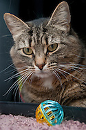 This is a cat from the Chemung County SPCA.