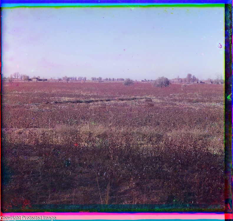 1905<br /> Shown here are a cotton field and adobe buildings on the estate of Grand Duke Nicholas Konstantinovich (1850&ndash;1918), grandson of Tsar Nicholas I, in Golodnaia Steppe (Hungry Steppe), located in present-day Uzbekistan. Exiled from Saint Petersburg in 1874 because of a family scandal, Nicholas settled in 1881 in Tashkent. There he sponsored a number of philanthropic and entrepreneurial projects. Among the latter was a vast irrigation scheme intended to provide arable land to Russian settlers and make Golodnaia Steppe a productive area for raising cotton and wheat. The image is by Russian photographer Sergei Mikhailovich Prokudin-Gorskii (1863&ndash;1944), who used a special color photography process to create a visual record of the Russian Empire in the early 20th century. Some of Prokudin-Gorskii&rsquo;s photographs date from about 1905, but the bulk of his work is from between 1909 and 1915, when, with the support of Tsar Nicholas II and the Ministry of Transportation, he undertook extended trips through many parts of the empire. Prokudin-Gorskii was particularly interested in recently acquired territories of the Russian Empire such as Turkestan (present-day Uzbekistan and neighboring states), which he visited on a number of occasions, including two trips in 1911. His work there reveals a dual purpose: to illustrate progress and development as a result of Russian settlement, and to record the monuments of traditional Islamic culture.