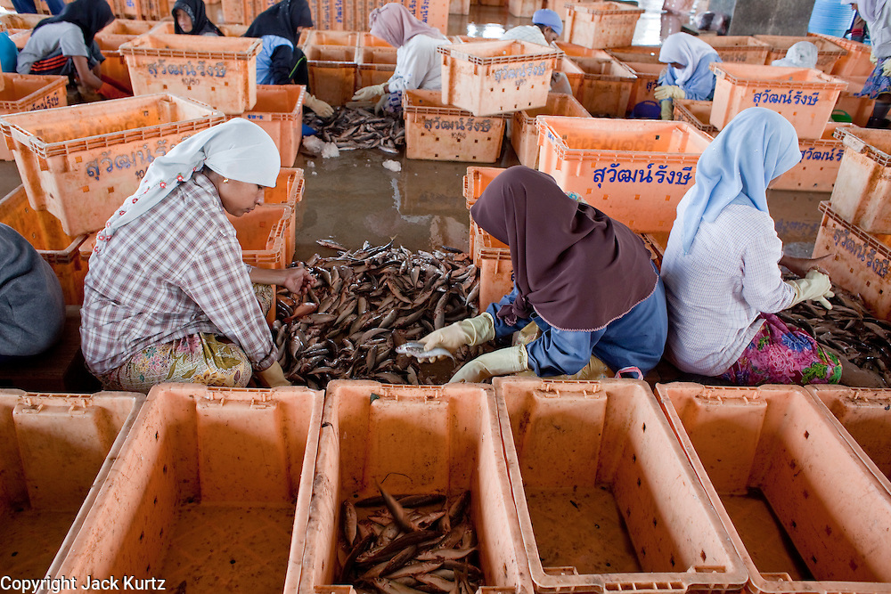 Sept. 27, 2009 -- PATTANI, THAILAND:   Muslim women sort fish in the fishing port in Pattani, Thailand, Sept. 27. Fishing is the main industry in Pattani, one of just three Thai provinces with a Muslim majority. Thousands of people, mostly Buddhist Thais and Burmese Buddhist immigrants, are employed in the fishing industry, either crewing ships, working in processing plants or working in the ship building and refreshing yards.  Photo by Jack Kurtz / ZUMA Press