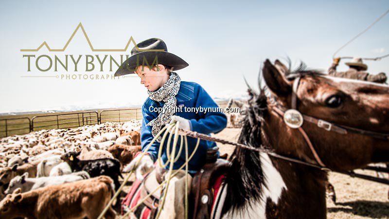 boy in black hat on a horse roping a calf