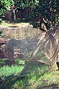 Sieci rybackie w Kuznicy na Polwyspie Helskim, 23-06-2005, fot: Piotr Gesicki..Fishing net drying in Kuznica on Hel pennisula, on Baltic sea, Poland, 23-06-2005, photo: Piotr Gesicki. Hel pennisula on Baltic sea in Poland photo by Piotr Gesicki Fishing nets drying in Kuznica village ,