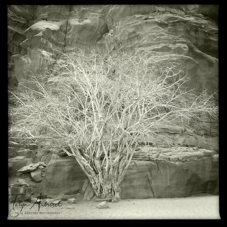 Leafless in black and white - Wadi Rum, Jordan