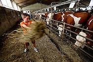 29/07/13 - SAINT NECTAIRE - PUY DE DOME - FRANCE - Agro tourisme a la ferme Bellonte, exploitation laitiere en race Montbeliarde et fabricant de Fromage AOP Saint Nectaire - Photo Jerome CHABANNE