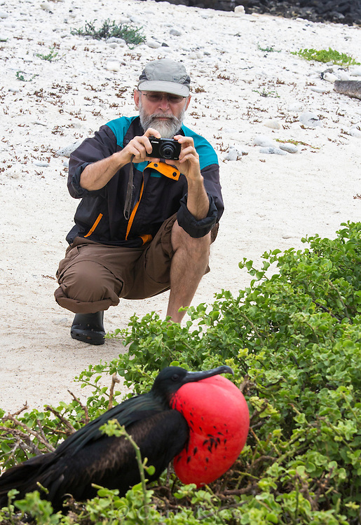 Male Frigatebird, Galapagos