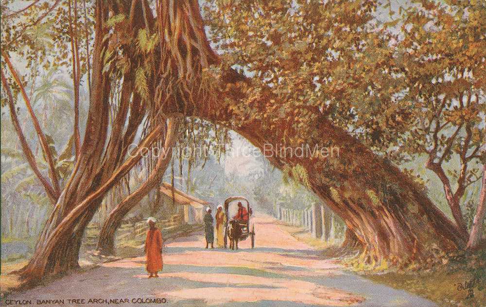 Ceylon Banyan Tree Arch near Colombo.