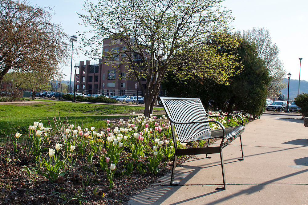 UW-L Flowers. Photo by Pa Moua-Yang. University Communications.