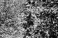 """Cologna (Salerno), Italia - 11 luglio 2010. Laser-tag combat session nei boschi di Cologna nel salernitano. Il laser-tag e? usato dai Marines americani per allenamento ed e? basato sulla tecnologia ad infrarossi che genera """"proiettili di luce"""" assolutamente non dannosi. Il gioco ha come scopo l'aggregazione, vince il gruppo, mai il singolo..Ph. Roberto Salomone Ag. Controluce.ITALY - Laser-tag combat session in the woods of Cologna on July 11, 2010. Laser-tag games are based on infrared technology that creates harmless """"light"""" bullets."""