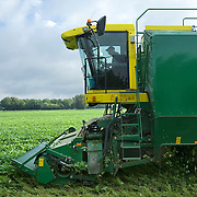 Nederland Giessen 28 augustus 2009 20090828 Foto: David Rozing  ..Serie over levensmiddelensector                                                                                      .Machinale oogst van tuinbonen. Deze boontjes worden vervolgens getransporteerd naar de fabriek van HAK, waar de groente dezelfde dag wordt verwerkt. Boer bestuurt landbouwvoertuig en oogst het land. Harvest ..Foto: David Rozing