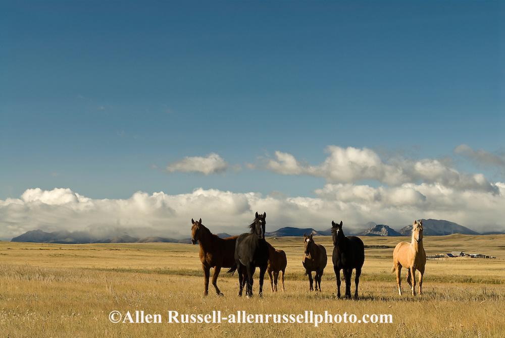 Horses, Rocky Mountain Front, Blackfeet Indian Reservation, Montana