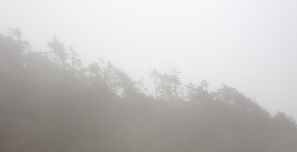 Trees, through the early morning fog on a ridge rising above the shoreline along the Oregon Coast.