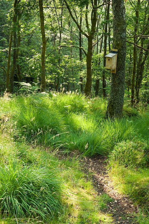 LIttle Drum wood, Glen Finglas, West Dumbartshire