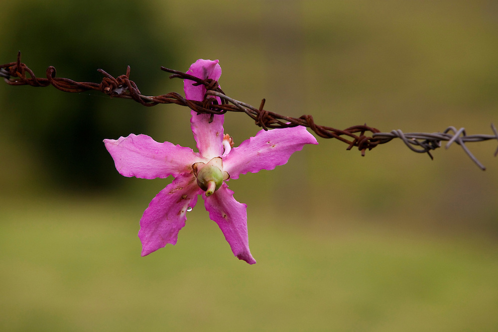 Munhoz_MG, Brasil...Detalhe de flores...Flowers detail...Foto: LEO DRUMOND / NITRO....