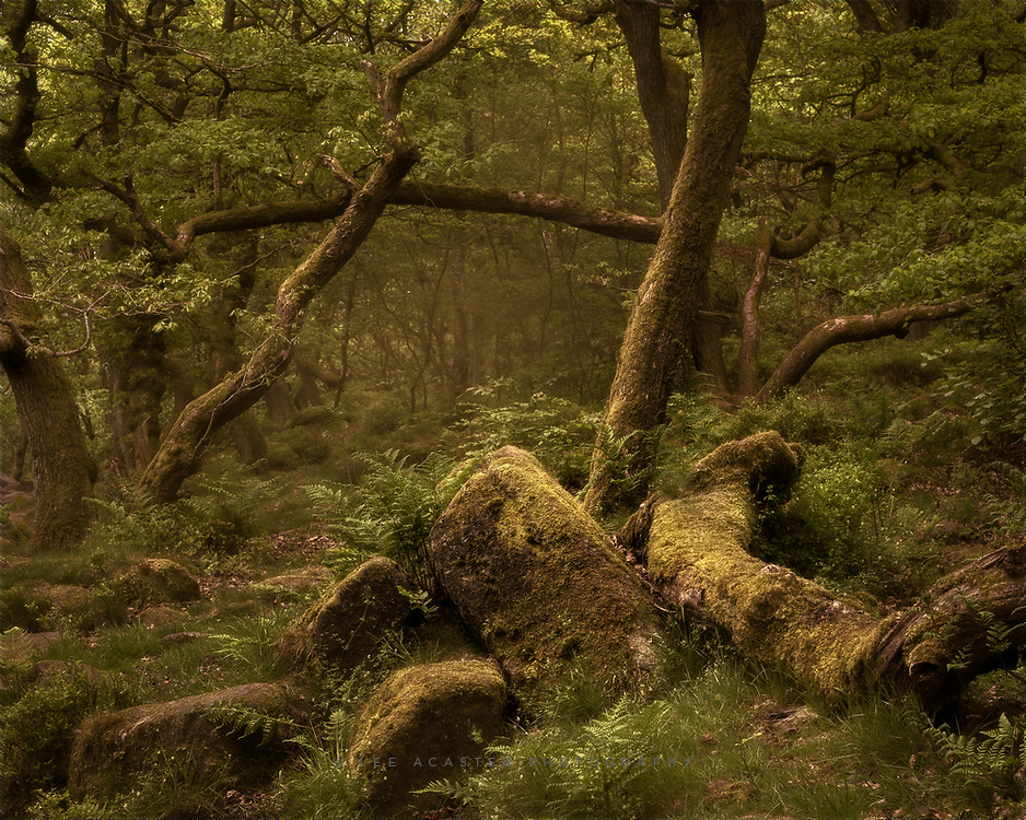 Had a long weekend in the Peak District, lots of nice walking, but weather was terrible for photography. What I wouldn't give for a misty morning down in Padley Gorge though. A very large nod to Mark Littlejohn's sublime Woodland Wanders on the processing, which is probably my all time favourite image