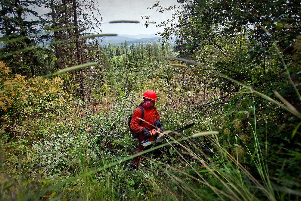 An Alpha Service crew member saws his way through tall brush and shrubs Thursday on the east side of Tubbs Hill. The work is being done to reduce the fire danger on the popular recreation area by removing the flammable fuels.