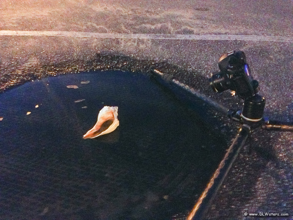 """This is how I photographed """"Twilight Shell Reflection""""."""