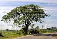 Tractor in the shade in Orlando Nordase, Mariel, Artemisa, Cuba.