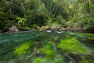Oceania; New Zealand; Aotearoa; North Island; Kawerau; Tarawera; river; fern; nature; forest; stream; tropical