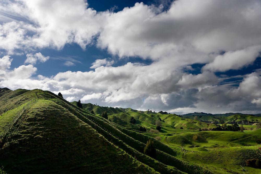 Green hilly farmland near Taumarunui.