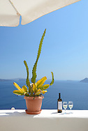 Cactus and white wine at the sea,Oia,Santorini, Kyclades,South Aegean, Greece,Europe