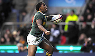 © SPORTZPICS /SECONDS LEFT IMAGES 2010 - Rugby Union - Investec  Internationals  - England v South Africa - 27/11/10 - South Africa's Lwazi Mvovo.runs in and scores the try that sealed Englands fate and celebrates - at Twickenham Stadium UK -  All rights reserved