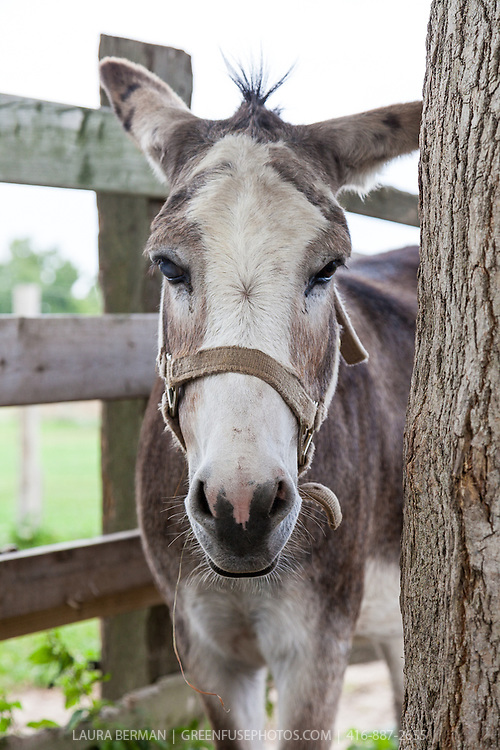 At the Primrose Donkey Sanctuary, Roseneath, Ontario