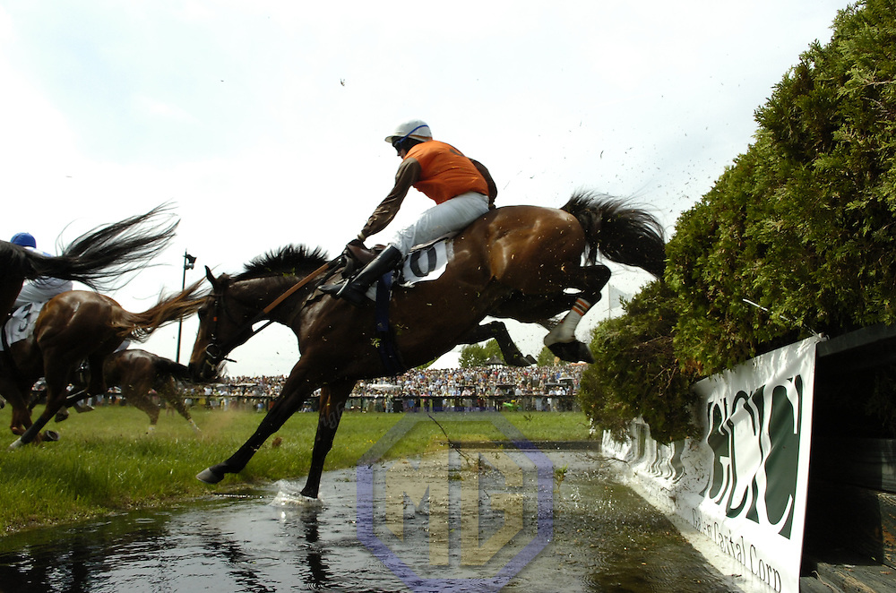 03 May 2008:  William Dowling aboard Orpington stumbles going over the water jump in the 3rd race of the 83rd running of the Virginia Gold Cup Races on October 20, 2007 at the Great Meadow in The Plains, Va..