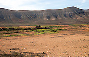 Dry volcanic landscape countryside near Oliva, Fuerteventura, Canary Islands, Spain