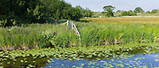 Tranquil scene on the Somerset Levels wetlands in summer. Rhynes used for drainage can suffer flooding in winter, UK