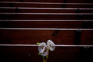 Damaged pews and plastic flowers following Hurricane Matthew at First Lutheran Church of Les Cayes on Tuesday, Oct. 11, 2016, in Les Cayes, Haiti. LCMS Communications/Erik M. Lunsford