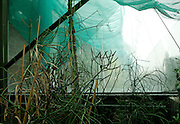 Incubators, restored 1995-97, Paul Chemetov and Borja Huidobro, Jardin des Plantes, Museum National d'Histoire Naturelle, Paris, France. Low angle view of plants growing beneath an awning which filters the afternoon light.