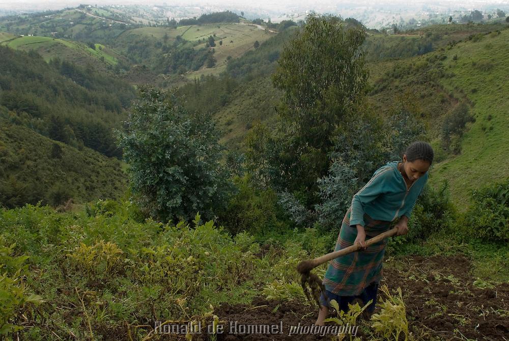 Récolte de pomme de terre sur les flancs du volcan Wenchi qui culmine à 3280 m à 200 km à l'est d'Addis Ababa. La forte inclinaison du sol empêche les fermiers de labourer avec une charrue à boeufs. Toutes les terres sont donc travaillées manuellement avec une pioche à trois dents.