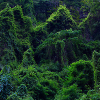 Jungle in North Vietnam