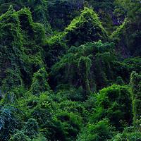 Jungle in North Vietnam