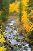 Upper McKenzie River  OR.