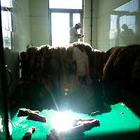 A chinese muslim man stand up behind a sheep skin, in a muslim meet factory in the Dujia town, in northwest China's Ningxia Hui Autonomous Region, China, on Thursday, September. 11, 2008. The islam is the second biggest religion in China, where there are between 20 and 30 millions of muslims.