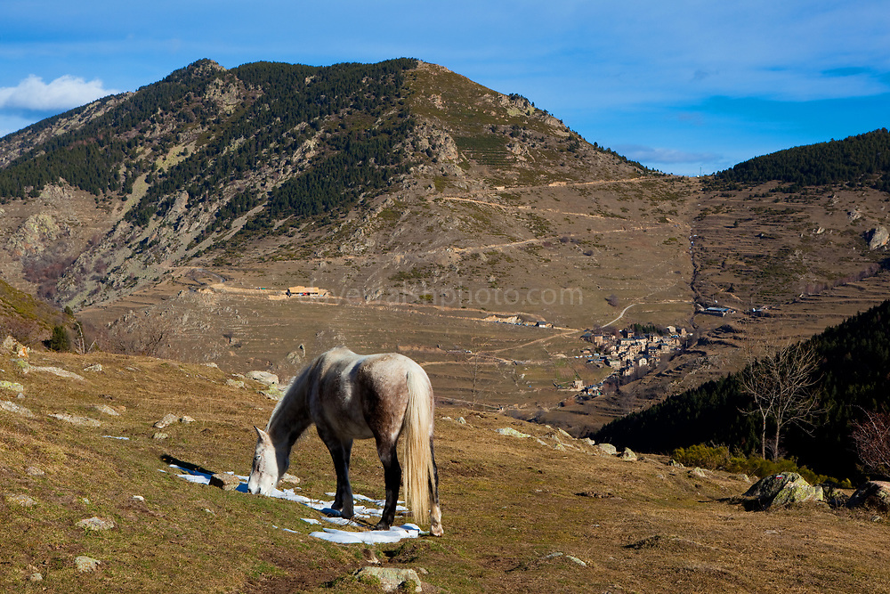 Pony in Mantet, in the French Pyrenees-Orientales.