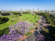 Aerial photograph of the blooming jacaranda trees at New Farm Park, Brisbane City in the background, Queensland, Australia