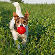 20120304 Fetch Pup