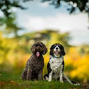 Oscar and Lucy