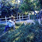 Rancheras/PVH