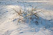 White sand on pristine sandy beach, Anna Maria Island, Florida, United States of America