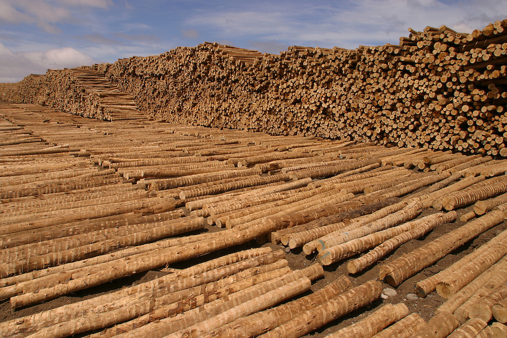 A Forestal FSC log sorting yard at Los Lagos, Puerto Montt, Chile, Feb. 13, 2004. Daniel Beltra/Greenpeace.