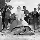 1953 - 15/07 Animals and Visitors at Dublin Zoo