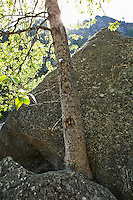 A tree growing from a crack between two boulders.