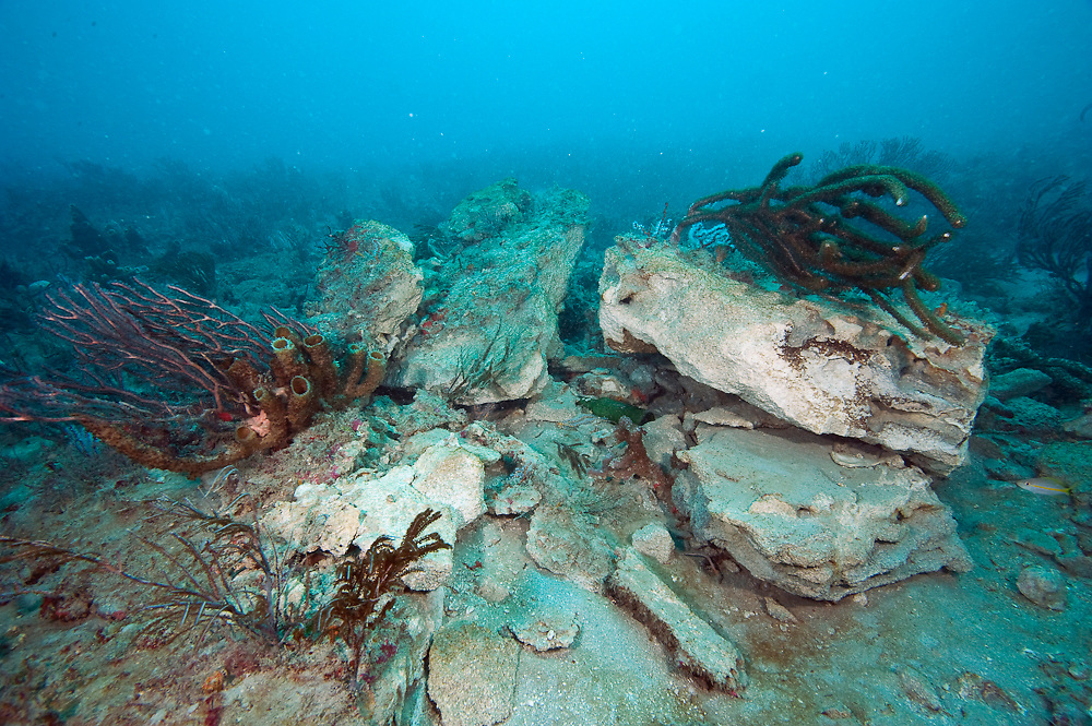 Coral reef in Palm Beach County, Florida, United States damaged by a cargo ship's anchor.