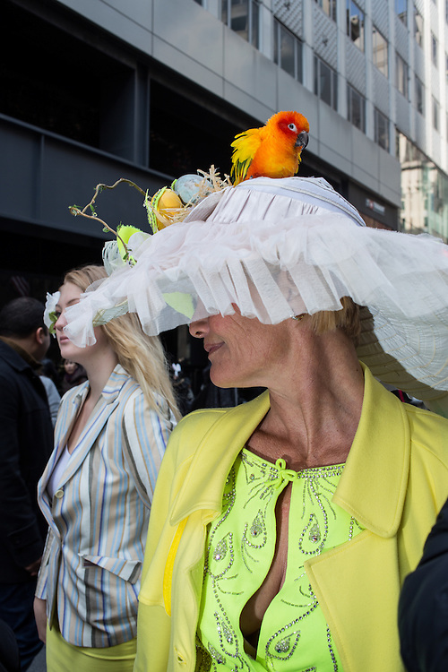 New York, NY, USA-27 March 2016. A woman with a large hat topped by a live conure parrot in the annual Easter Bonnet Parade and Festival.