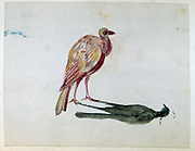 A Bird'. Watercolour.  Aurore Amadine Lucie Dupin (1804-1876) French  novelist and feminist who wrote under the name  of George Sand.