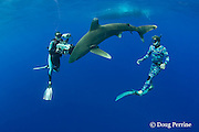 Scubazoo cameraman Jason Isley films Jimmy Hall with oceanic whitetip shark, Carcharhinus longimanus, off the Kona Coast of Hawaii Island ( the Big Island ), Hawaiian Islands ( Central Pacific Ocean ) MR 383, 384